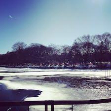 井の頭公園の池の風景。