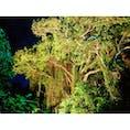 🚀レッツ原始トリップ! 🤠沖縄南部に野生のジャングルがあると聞きつけて、初のナイトジャングルトレッキングを体験。 🌴その名も、ウワーガージャングル。 🔦一寸先に何があるか分からない夜のジャングル。ライト片手に草をかき分け、道なき道を進むトレッキングは、超絶エキサイティング! 🗣知識豊富でユーモア満点のガイドさんと一緒に、沖縄の自然を知ることもできちゃう何とも意義深いツアー。 👻💫🦐道中、いわく付きの「マジムン(魔物)の洞窟」とか、広い空を見上げることができる「スカイホール」とか、夏になるとエビまみれになるという「シュリンプストリーム」とか、もう見どころ満載。 💪そしてジャングルから無事生還できたら、ちょっとしたご褒美もあるのだ♡ 🙆🏻♀️去年の10月から一般公開されたばっかりのウワーガージャングル、激しくおすすめ!