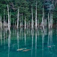 山口県 〜一の俣桜公園〜 水没林が水面に反射して 幻想的な風景になっております。 鯉も数匹 泳いでいるので 一緒に撮れればさらに良い写真に📸