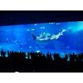久しぶりの投稿になりました 先日沖縄に旅行に行ってきました! その時に撮った美ら海水族館での1枚です😳