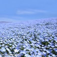 一生に一度は見たい日本の絶景としてメディアにも多数紹介されている国営ひたち海浜公園のネモフィラ。園内のみはらしの丘を可憐なネモフィラが青一色に染め上げる様は圧巻です💓例年の見頃はGW頃になります。