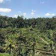 Indonesia🇮🇩 Bali Tegallalang Rice Terrace