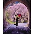 愛知県の新城市鳳来にある河津の桜並木