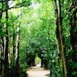 備瀬のフクギ並木  沖縄の森。 レンタルサイクルで森の中を駆け巡る  #沖縄#備瀬のフクギ並木#美ら海水族館のお隣さん