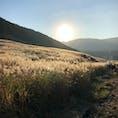 11月 神奈川県 仙石原高原