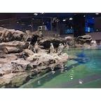 すみだ水族館(・Θ・)  ペンギンの家系図みたいなのが とても面白かった☺️ ペンギン関係もいろいろあるね💭💭